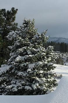 Tree with snow by Judith Szantyr