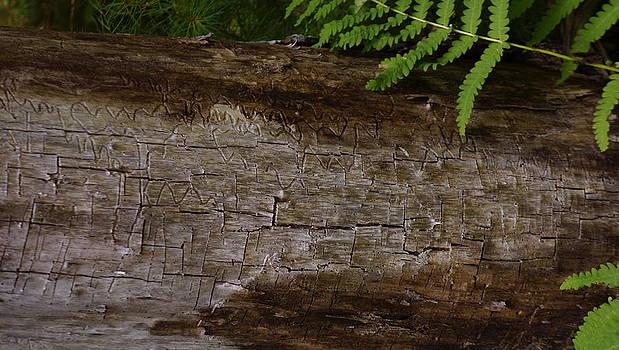 Dawn Hagar - Tree Worm