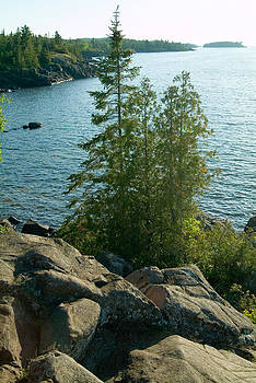 Devinder Sangha - Treeline of Lake Superior