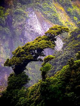 David Rich - Trees against the Wall of Milford Sound