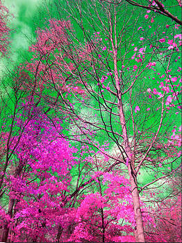 Trees Alive in Pink by Paul Szakacs