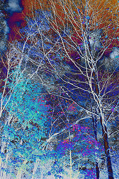 Trees Alive With Color by Paul Szakacs