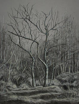 Janet Felts - Trees Along the Greenway