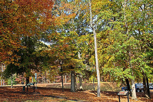 Trees and Fallen Leaves by Carolyn Ricks