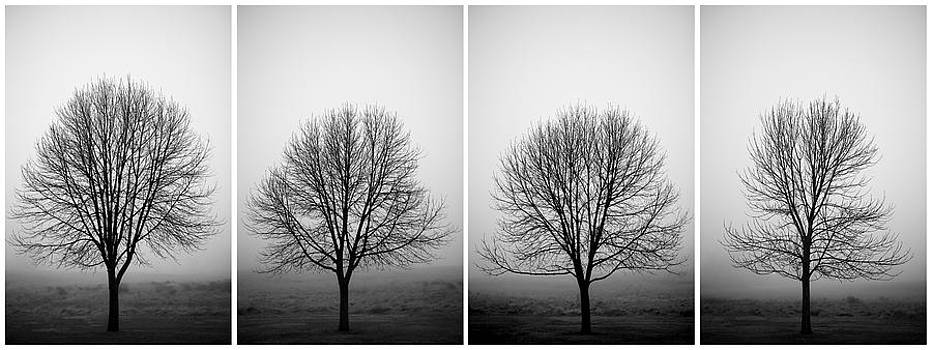 Trees and Fog by D Scott Clark