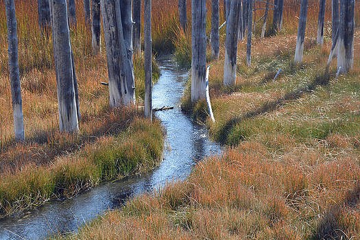 Trees and Shadows in Autumn Grasses by Bruce Gourley