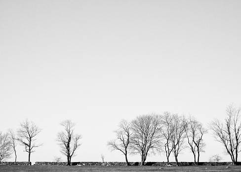 Trees at Colt State Park by Nancy De Flon