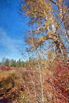 Bonnie Bruno - Trees at Fish Lake