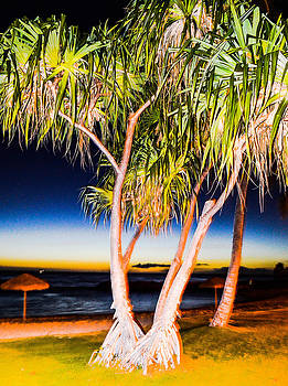 Trees at night by Lisa Cortez
