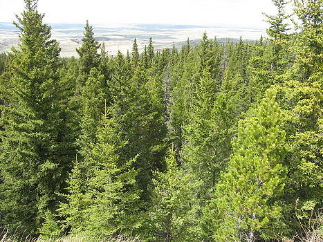 Trees Cypress Hills by Gordon Wunsch
