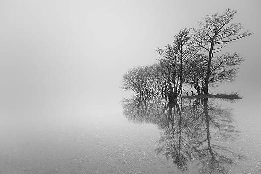 Trees by Grant Glendinning