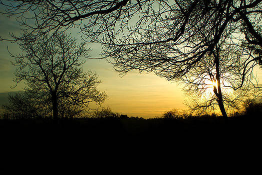 Fizzy Image - trees in a countryside scene at sunset