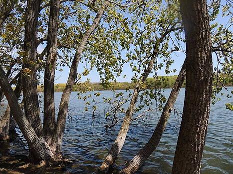 Anastasia Konn - Trees in a Lake