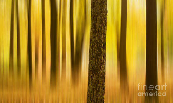 Rima Biswas - Trees in Autumn forest