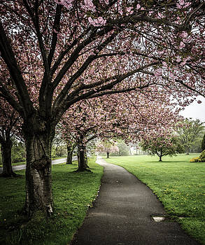 Trees in Bloom by Ann Sharpe