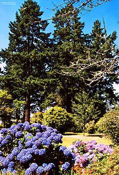 Trees in Brookings Oregon by Rafael Escalios