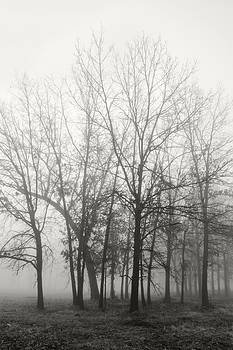 Trees in Fog2 by James Blackwell JR