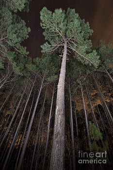 Jonathan Welch - Trees in Forest at Night