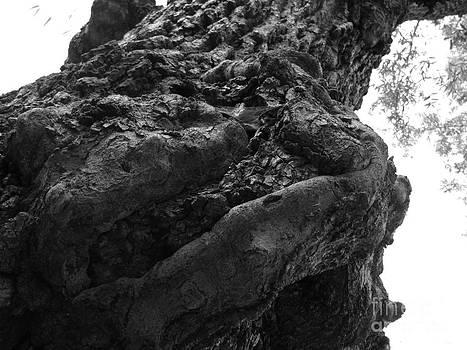 Trees in Herrmann Park by Michaelle Beasley