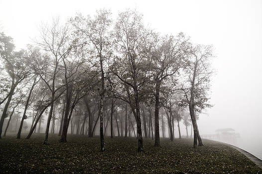 Trees In Morning Fog At The Banks of Lake Fork by Damian Hevia