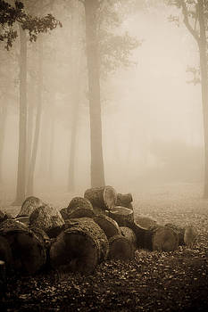 Trees in morning fog by Damian Hevia