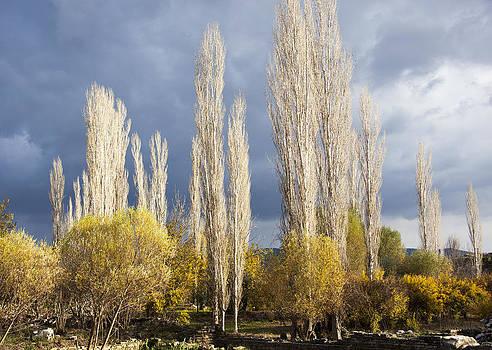 Ramunas Bruzas - Trees in Ruins