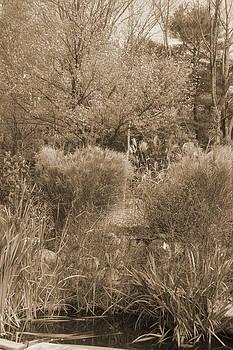 Joe Bledsoe - Trees in Sepia