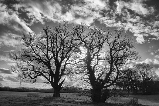 Trees In Silhouette by David Durham
