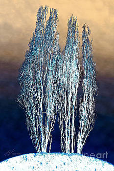 Artist and Photographer Laura Wrede - Trees in Snow