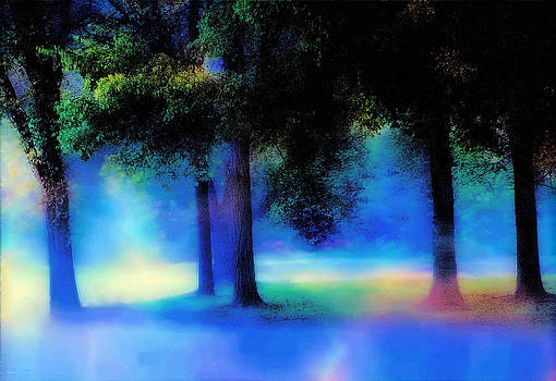 Trees in the Mist by Barbara D Richards