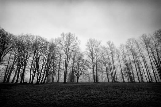 Trees in the Mist by David Williams