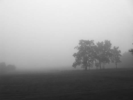 Rhonda Barrett - Trees in the Mist