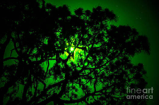 Trees in the Super Moon by Shawn  Bowen