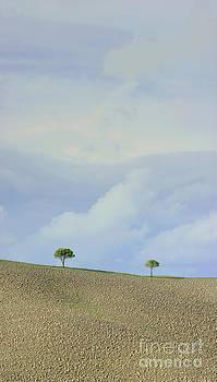 Trees in Val D'Orcia Tuscany Italy by Robert Leon