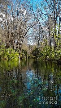Trees in water by Denise Ellis