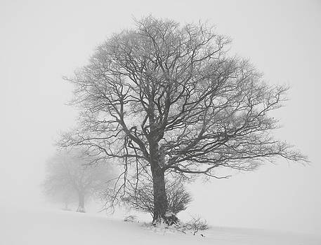 Trees in white out. by Pete Hemington