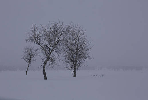 Trees in Winter by Susi Stroud