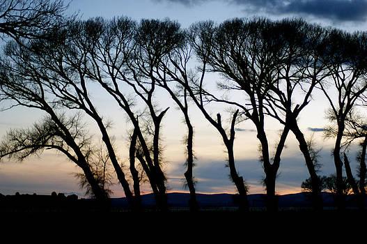 Trees by Kasie Morgan