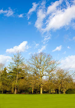 Fizzy Image - trees