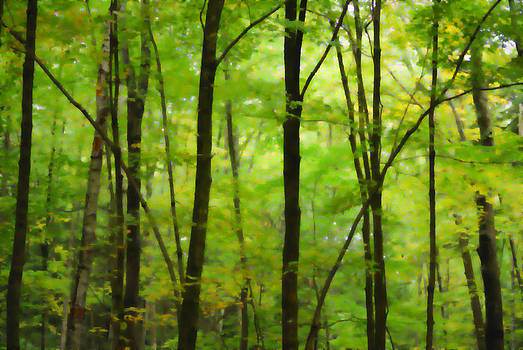 Trees Number Three by Tom Heeter