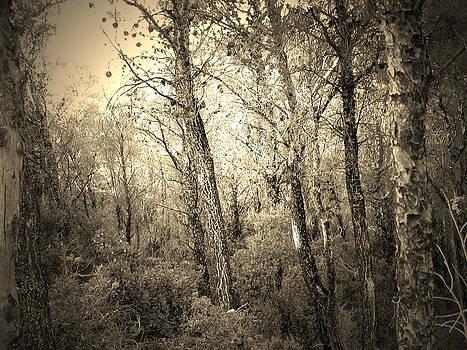 Trees of Parnitha by Angela Zafiris