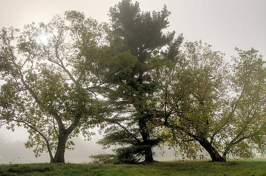 Trees on a misty morning.  by Rob Huntley