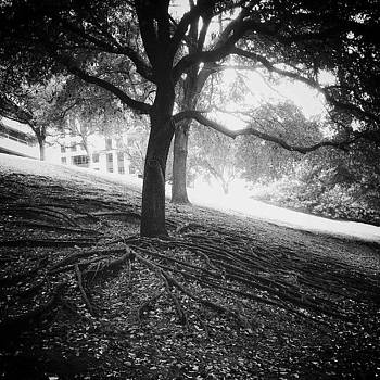 #trees #shadows #light #nature by Matt Gannon
