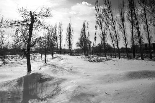 Trees by Stephanus Le Roux