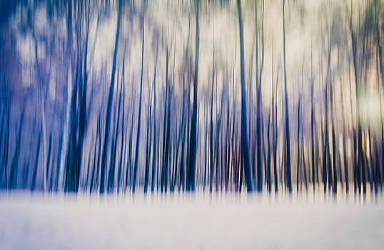 Winter Forest by Thomas Richter