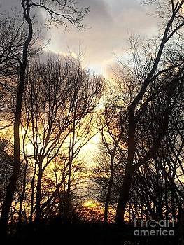 Treesome Sunset by Brianna Kelly