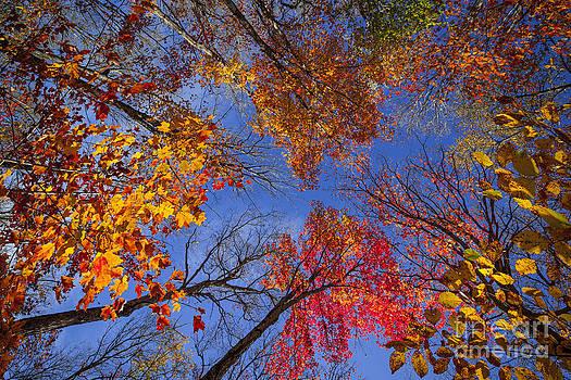 Elena Elisseeva - Treetops in fall forest