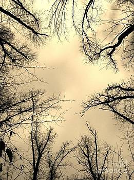 Treetops in Sepia by Maureen Cavanaugh Berry