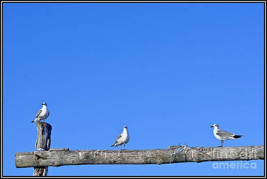 Agus Aldalur - tres gaviotas