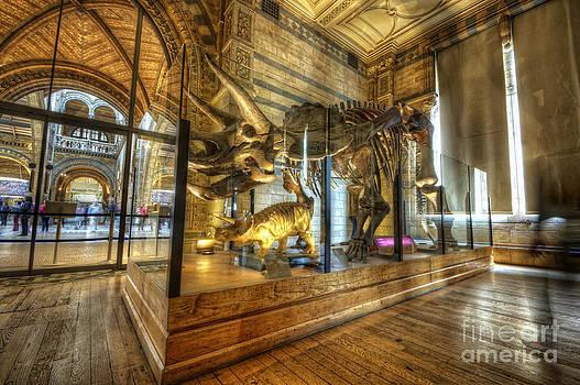 Yhun Suarez - Triceratops